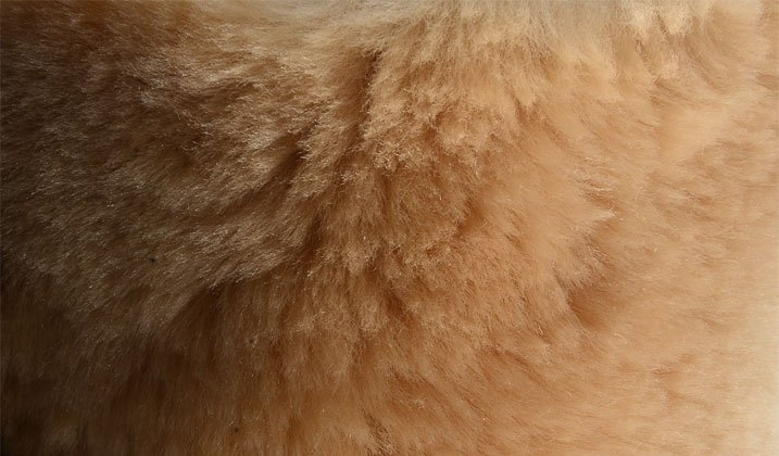 Sheepskin and Other Fur-Like Covers