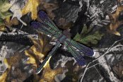 Dash Designs® - DragonFly Embroidered Logo