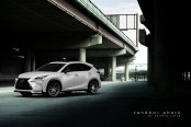 Proper Tuning for Modern Looking White Lexus NX
