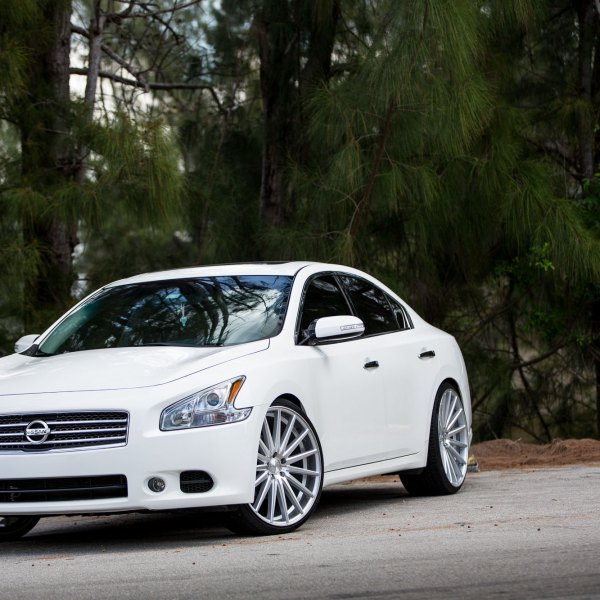 White Nissan Maxima With Chrome Grille   Photo By Vossen