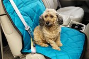 Image may not reflect your exact vehicle! Pet Pad® - Teal Bucket Seat Protector
